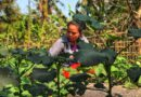 Advance food sovereignty and agroecology to help address COVID-19 crisis